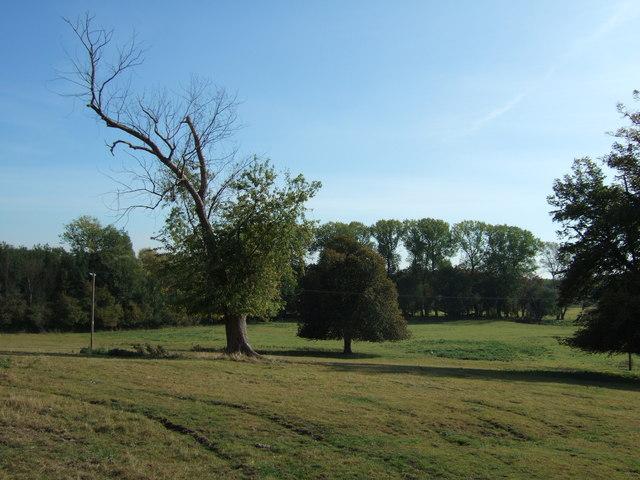 Parkland near Huntingdon