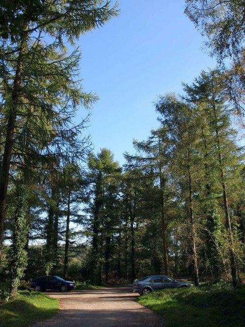 Woodland car park, Cann Wood