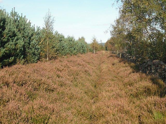 Heather covered path, Swinnie Plantation