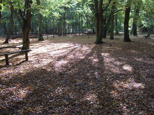 A bed of leaves, Hinchingbrooke Country Park