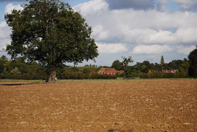 Tree in a ploughed field, Leigh