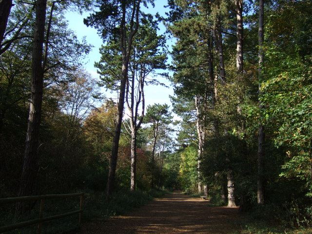 Track through the trees