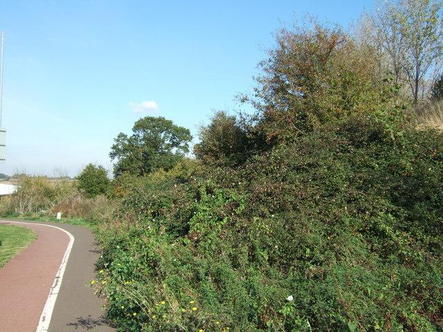 Bushes and brambles