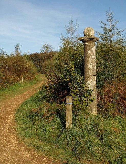 Column, Cann Wood