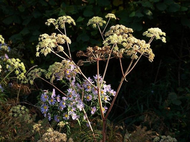 Flowers in Cann Wood