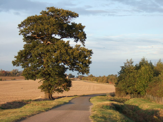 A lonely oak near the A14