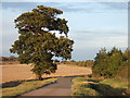 TL2173 : A lonely oak near the A14 by Richard Humphrey
