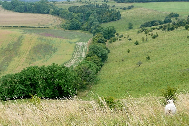 West Woodhay Downs
