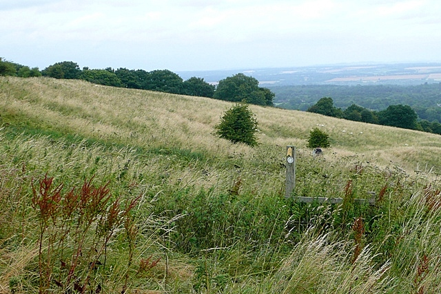 View from West Woodhay Down
