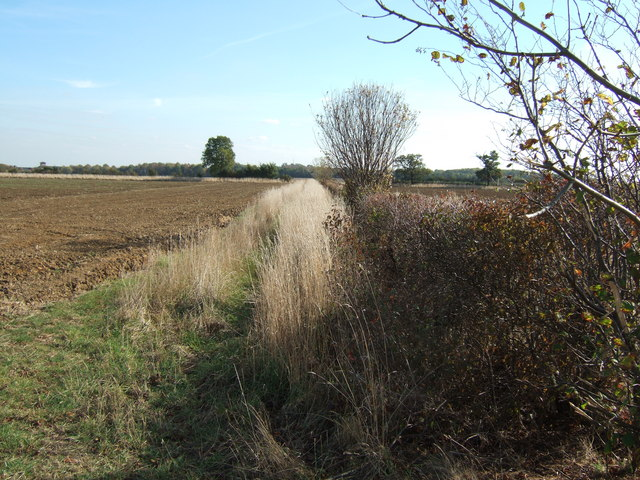 Hedgerow near Waterloo Farm, Huntingdon
