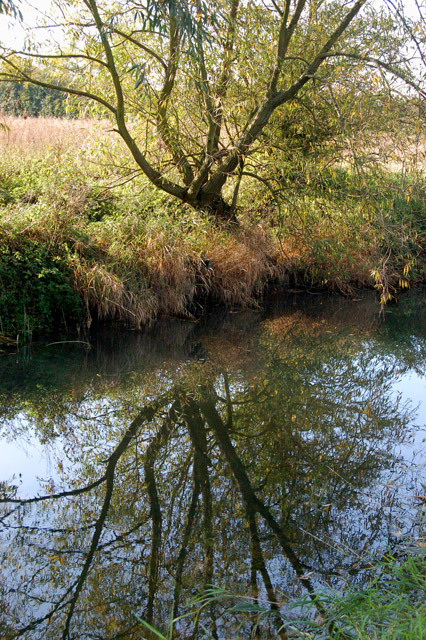 Willow reflected in the River Leam near the Fosse Way