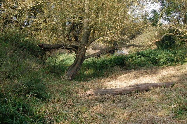 Silted oxbow beside the River Leam near Eathorpe Park