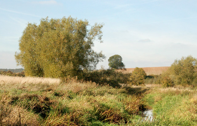 Reeds and willows beside the River Leam near Eathorpe Park