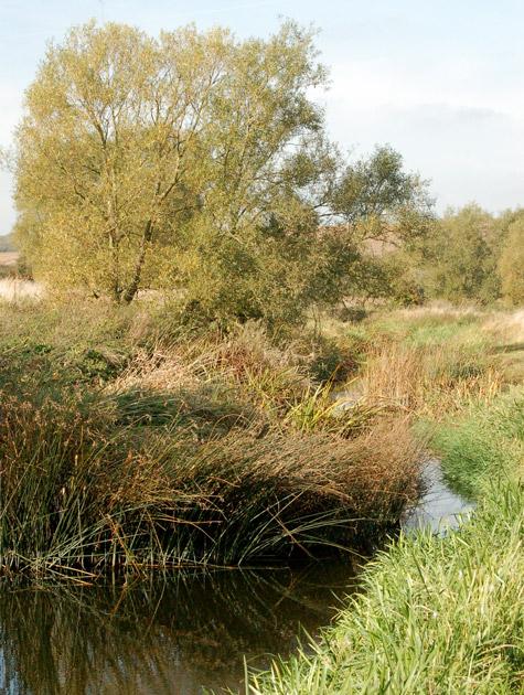 An overgrown length on the River Leam near Eathorpe Park