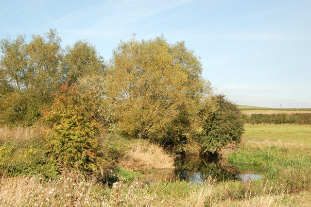 Willows overhanging a bend in the River Leam near the Fosse Way