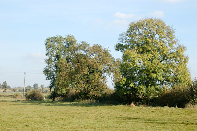 Trees in a hedgerow north of Eathorpe Park