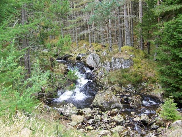 Fee Burn, Glen Doll Forest