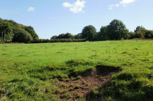 Field, Llanfrechfa