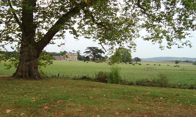 Autumn at Croome with black cattle