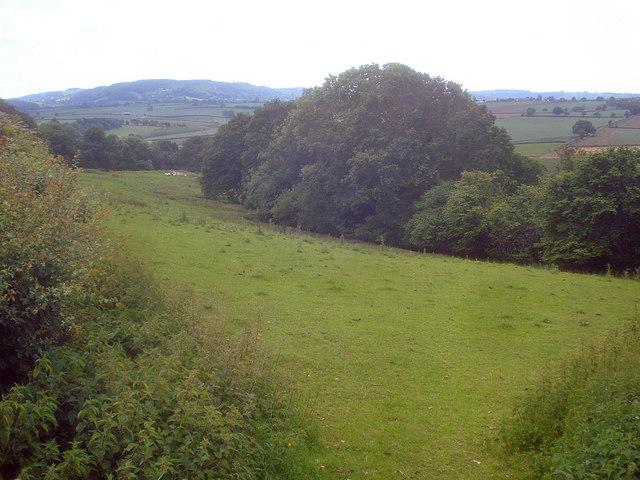 Meadow south of Linton