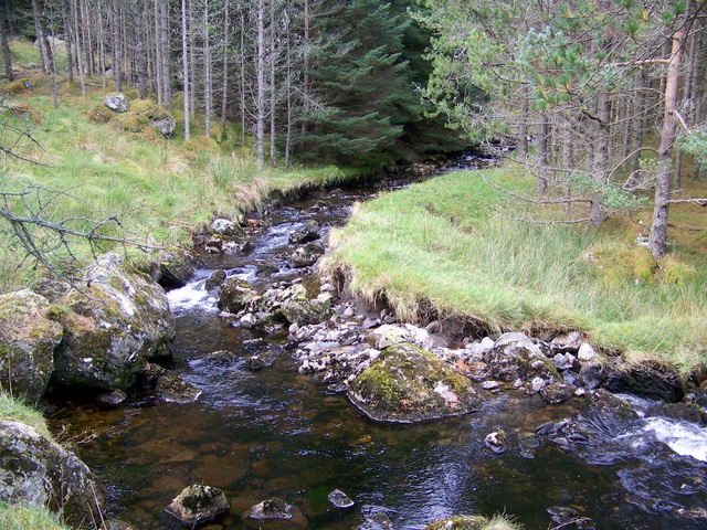 The Fee Burn, Glen Doll Forest