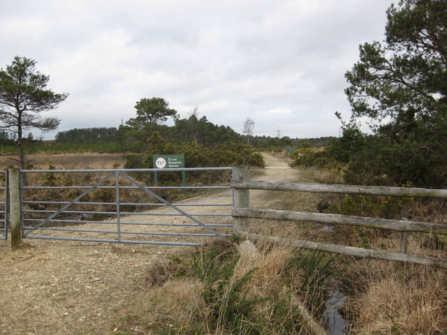 Wareham Forest walk