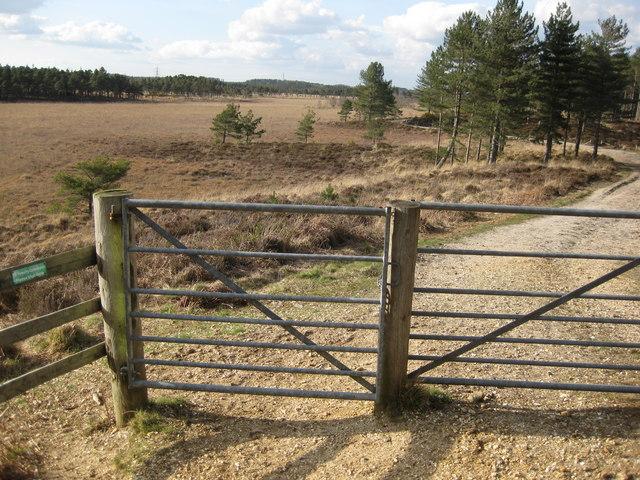 Wareham Forest walks