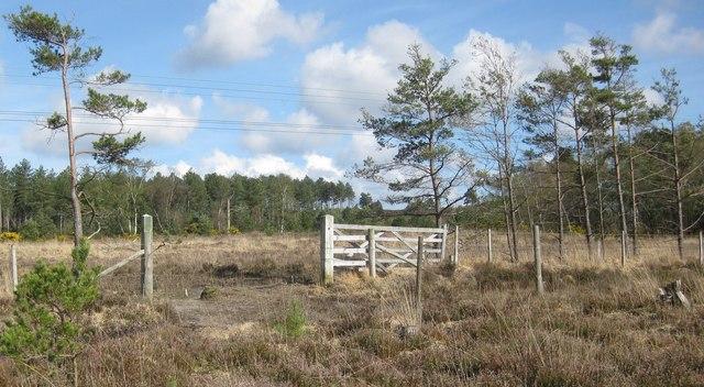 Wareham Forest Walk - Decoy Heath