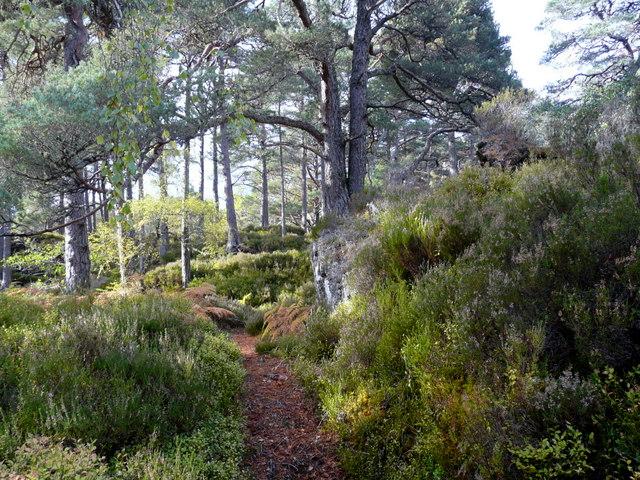 Forest walk, Glen Strathfarrar.