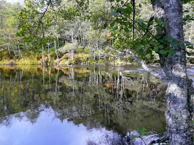 Reflections in the River Farrar.