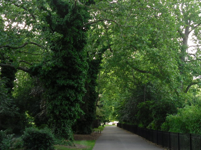 Tree-lined path in Southwark Park