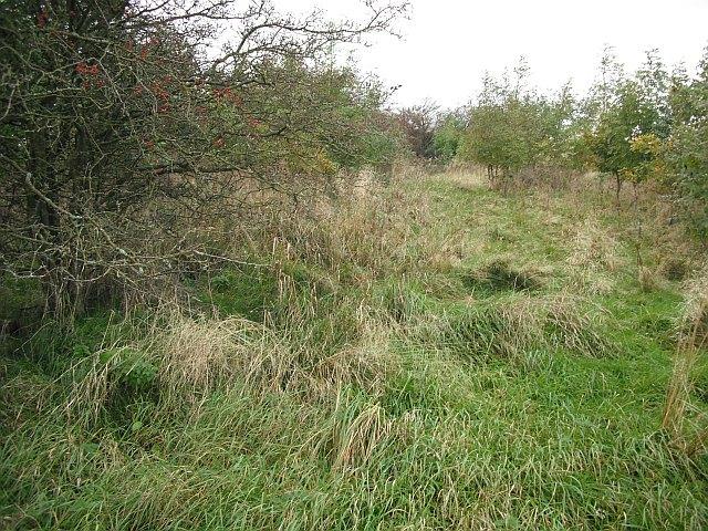 Barleyside Wood