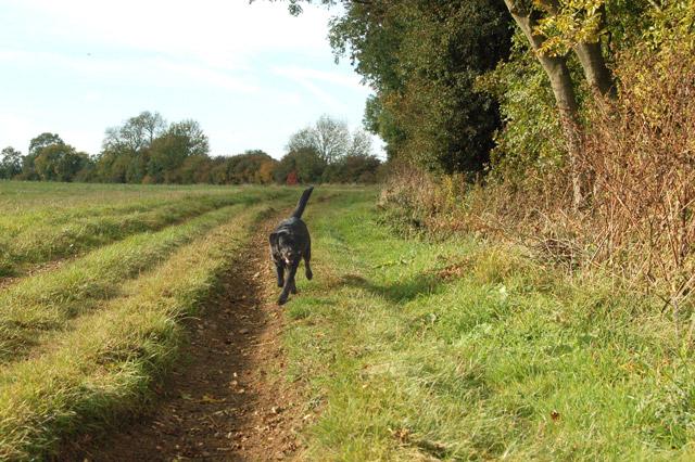 Gypsy Lane, Upper Shuckburgh (2)