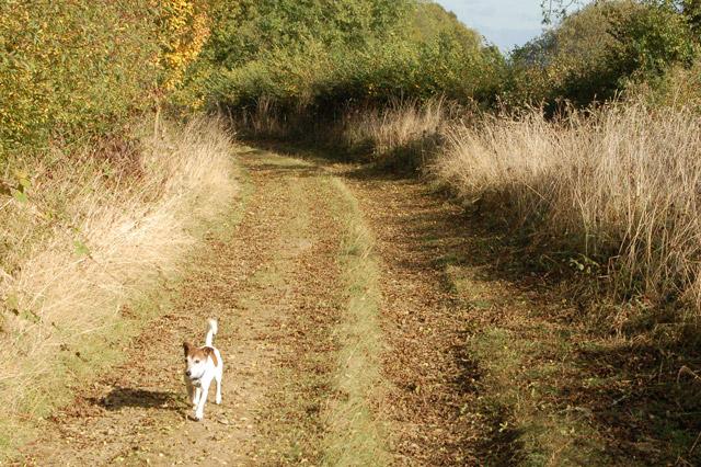 Gypsy Lane, Upper Shuckburgh (7)