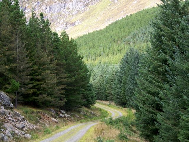 Forest track, Glen Doll Forest