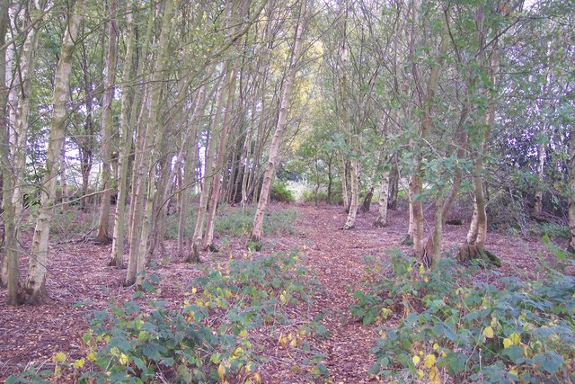 Footpath in Bottom Wood