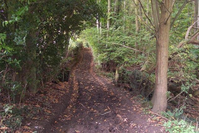 Straight bridleway in Birchfield Wood