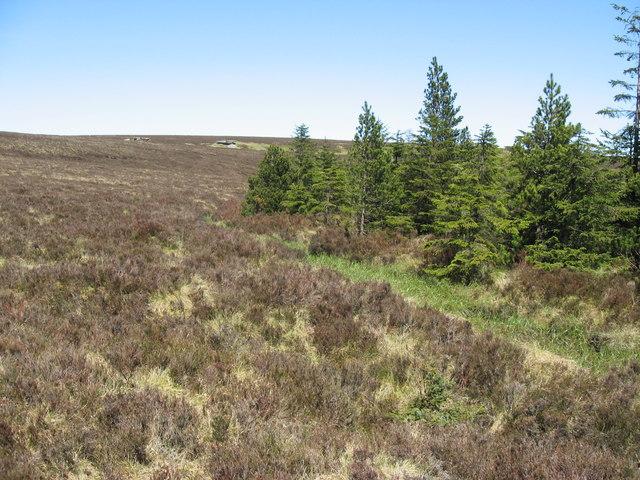 Plantation near Wool Meath