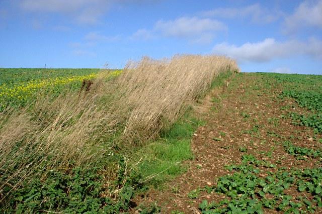 Between Two Crops