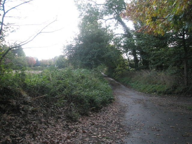 Lane from St Peter, Terwick to the main road