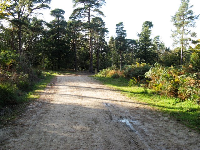 Footpath through Broadstone Warren