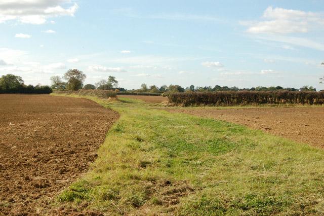 Broad headland between unfenced fields near Northfields Farm