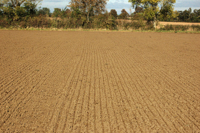 Drill lines in a harrowed field near Northfields Farm