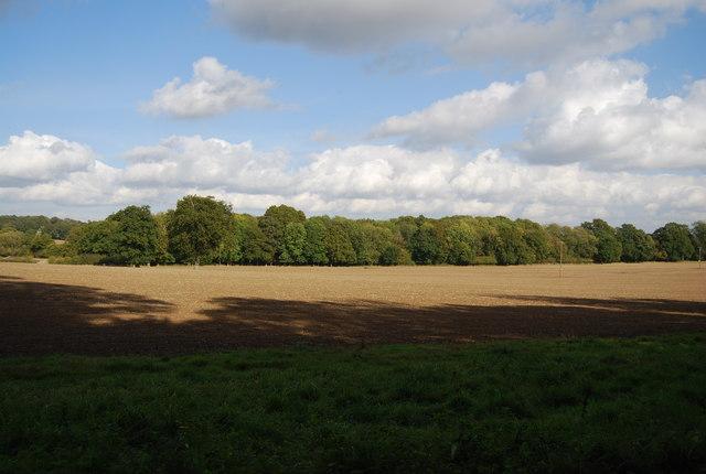 Ashpit Plantation