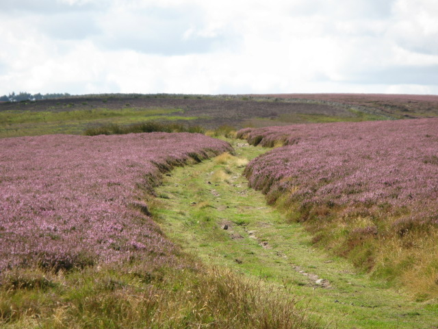 Track on Burntridge Moor above Westburnhope
