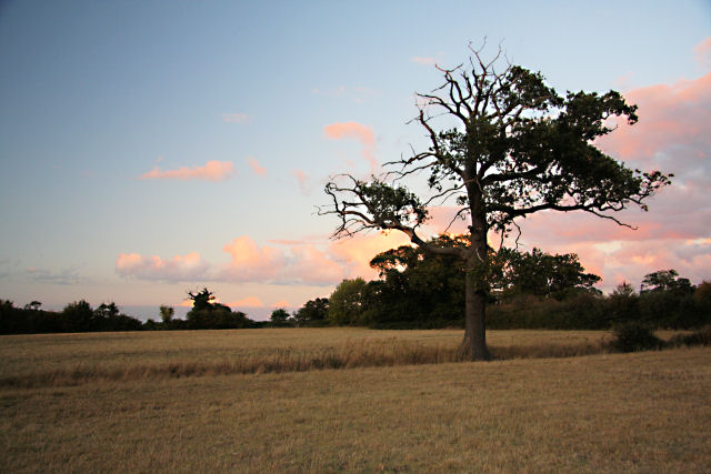 Late evening at Little Saxham
