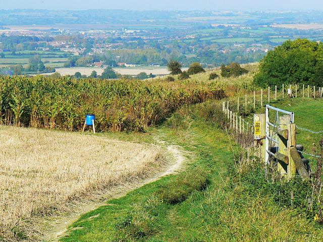 Footpath and maize, Heddington CP