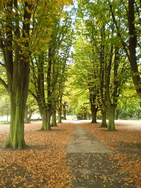 Autumn in Elsecar Park