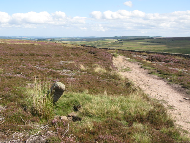 Boundary stone and track east of Backstone Cleugh