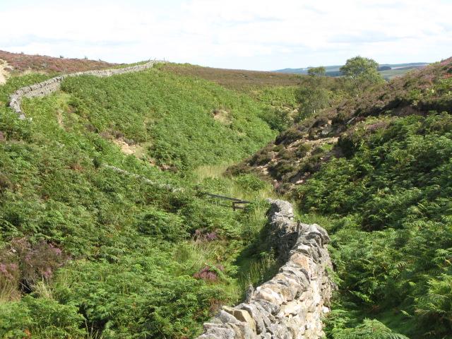 Backstone Cleugh (5)